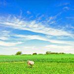 【太陽光発電の申請は不要?】初心者でも理解できる農地転用許可基準