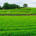 農地売買のすべて|むずかしい許可・登記・手続きを分かりやすく解説